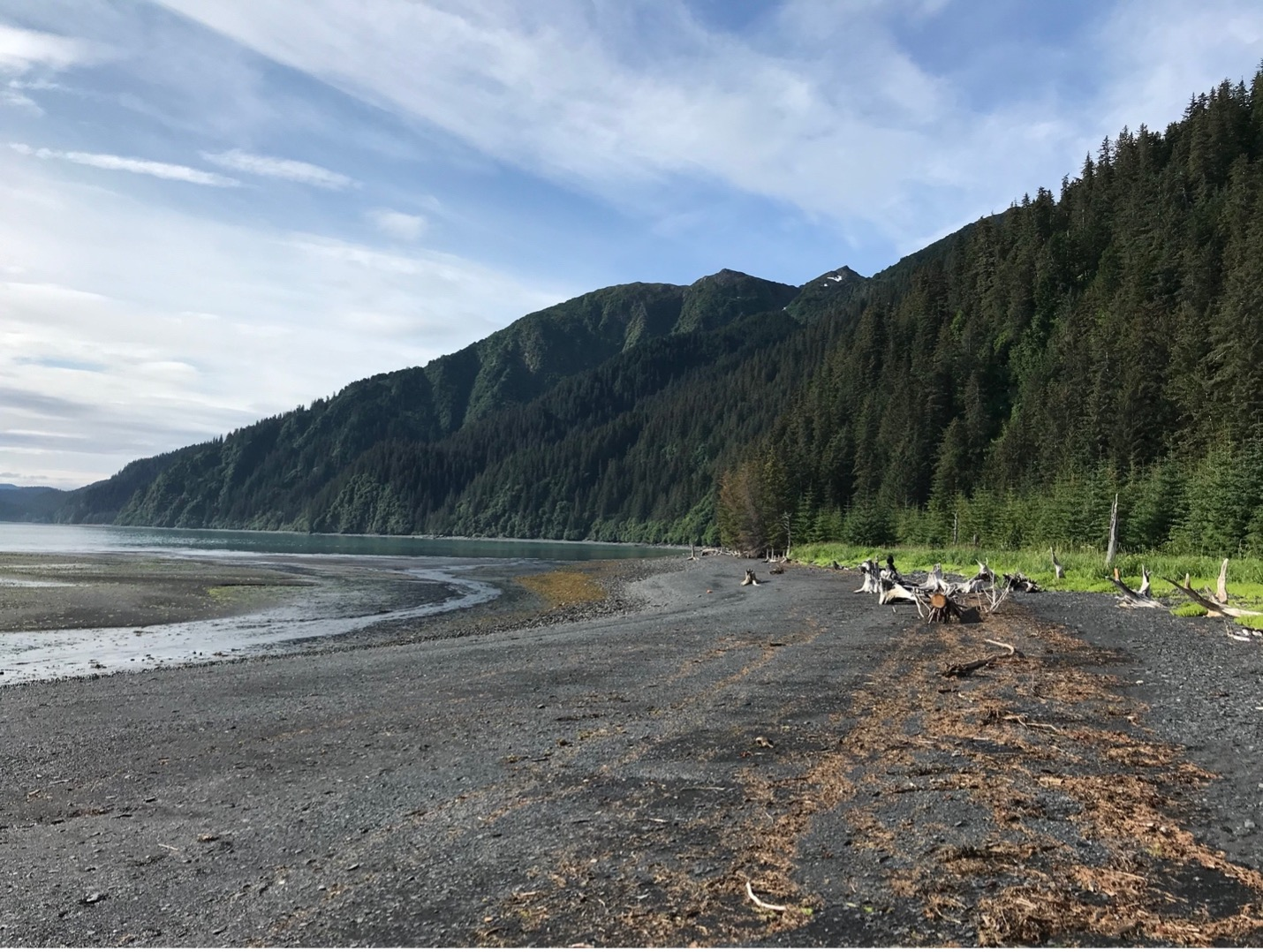 Mountains with evergreen trees bump up against a beach with driftwood
